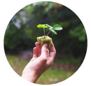 Rockwool used in Tower Garden Aeroponic Hydroponic Gardening