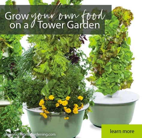 Grow your own food on a hydroponic Tower Garden