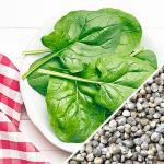 Spinach_-_Matador_Viking_seeds_main_1024x1024