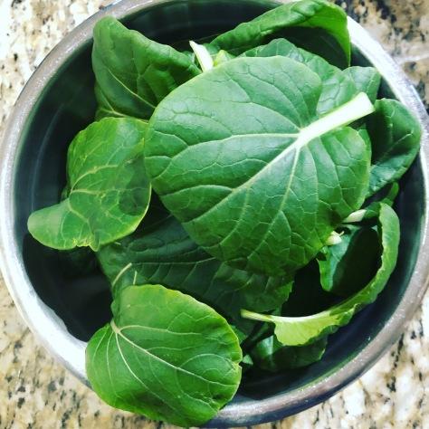 hydroponic-bok-choy-garden-fresh