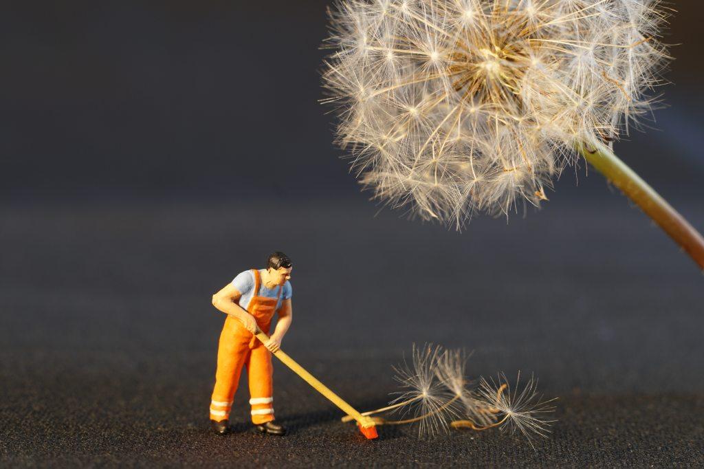 dandelion-seed-perspective