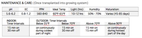 Hydroponic Lettuce Growing Guide
