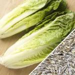 Lettuce-Romaine-Classic-SN