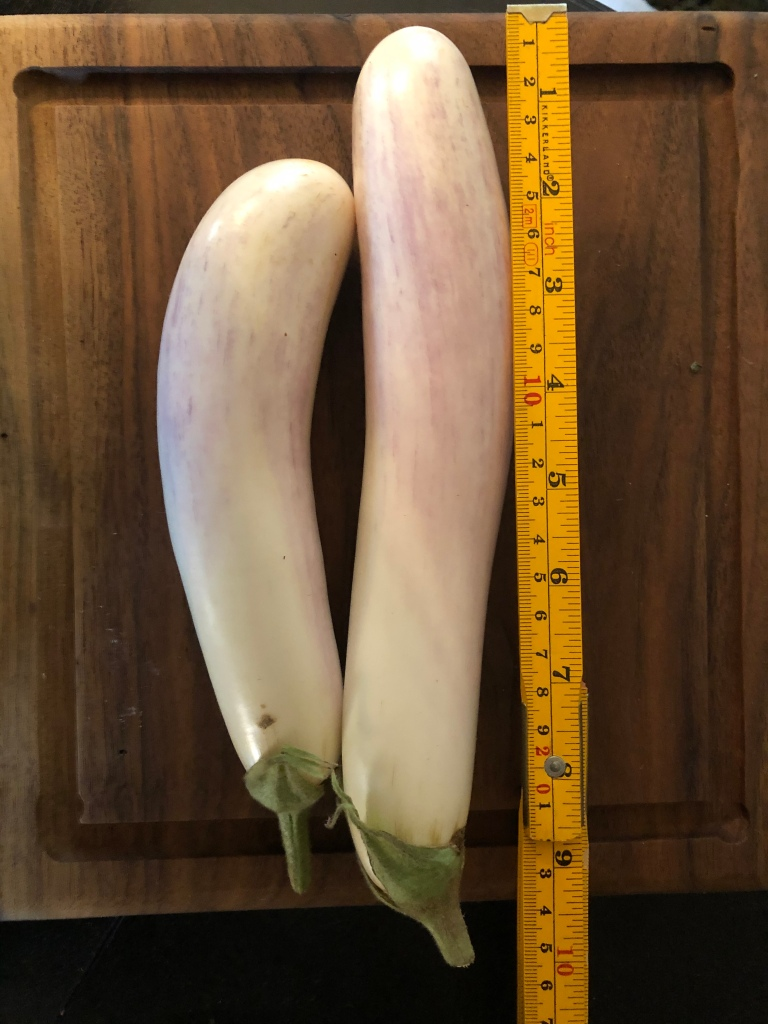 "Hydroponic Eggplant grows between 7""-9"" in length"